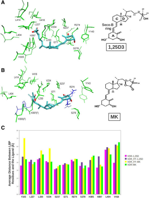 Molecular dynamics of ligand binding pocket. A) Comparison, superimposition, of the VDR-1,25D3 and VDR_FF-1,25D3 complexes. In the figure, the VDR-1,25D3 model is shown as solid, green bonds with R274, H305 and H397 (blue). The VDR_FF-1,25D3 model is shown as transparent, green and blue (only R274) bonds. The chemical structure of 1,25D3 is shown to the right of the model and the A-ring, seco-B-ring, C/D-ring and side-chain 25-OH group are labeled. B) Superimposition of the VDR-MK and VDR_FF-MK molecular models. The binding site of VDR-MK is shown as transparent, green bonds and the binding site for VDR_FF-MK is shown as solid bonds. As in panel A, R274, H305 and H397 are colored blue and F305 and F397 green. The chemical structure of MK is shown to the right of the figure and carbon-25 labeled. C) The graph shows the mean, averaged hydrogen bonding and hydrophobic distances between the binding site residues and the ligand for VDR-1,25D3 (magenta), VDR-MK (green), VDR_FF-1.25D3 (purple) and VDR_FF-MK (yellow).