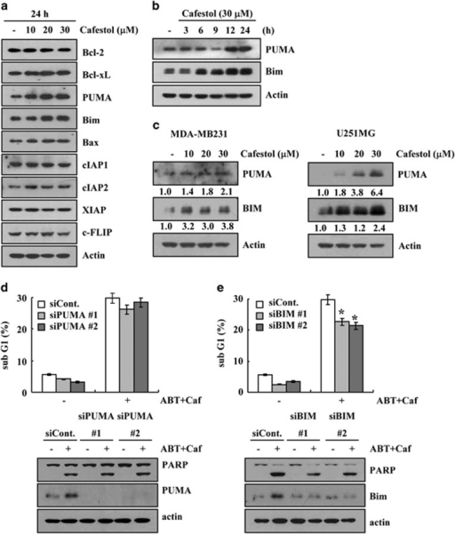 Upregulation of Bim expression is associated with cafestol plus ABT-737-induced apoptosis. (a) Caki cells were treated with the indicated concentrations of cafestol for 24 h. The protein expression levels of Bcl-2, Bcl-xL, PUMA, Bim, Bax, cIAP1, cIAP2, XIAP, and c-FLIP were determined by western blotting. Actin served as a control for protein loadings. (b) Caki cells were treated with 30 μM cafestol for the indicated time periods. The protein expression levels of PUMA and Bim were determined by western blotting. Actin served as a control for protein loadings. (c) MDA-MB231 and U251MG cells were treated with the indicated concentrations of cafestol for 24 h. The protein expression levels of PUMA and Bim were determined by western blotting. Actin served as a control for protein loadings. (d and e) Mcl-1-overexpressed cells (Caki/Mcl-1) were transiently transfected with PUMA (c) and Bim (d) siRNA or control siRNA. Overnight after transfection, cells were treated with 30 μM cafestol (Caf) and 0.1 μM ABT-737 (ABT) for 24 h. The level of apoptosis was analyzed by measuring the sub-G1 fraction by flow cytometry (d and e, upper panel). Equal amounts of cell lysates (60 μg) were separated by gel electrophoresis and analyzed by western blotting for poly ADP-ribose polymerase (PARP), PUMA, and Bim. Actin served as a control for protein loadings. The values in panels (d and e) represent the mean±S.D. from three independent samples. *P<0.05 compared with ABT-737 plus cafestol-treated control siRNA. The data represent three independent experiments