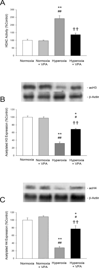 Bar graphs depicting histone deacetylase (HDAC) activity (A) as well as acetylated histone H3 (B) and acetylated histone H4 (C) protein expressions in lung tissues of rat pups.*p<0.05 and **p<0.001 compared to Normoxia group; #p<0.05 and ##p<0.001 compared to Normoxia+VPA group; and ††p<0.001 compared to Hyperoxia group using One-Way ANOVA followed by post-hoc Tukey test.