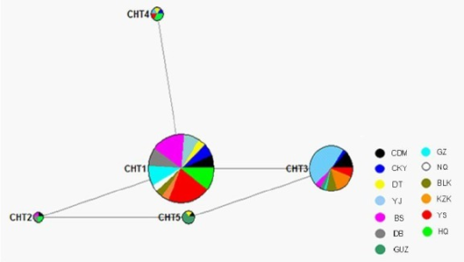 A Median-joining (MJ) network calculation of Chinese horse Y chromosome. Colored circles represent sequence haplotypes,, the area being proportional to the frequency of the haplotype in total samples. Branch length is proportional to number of mutations. Different colors represent different horse breed. The network clearly revealed that CHT1 was in the center position, which indicated CHT1 maybe an ancestral haplotype. CDM, Chaidamu; CKY, Chakouyi; DT, Datong; YJ, Yanji; BS, Baise; DB, Debao pony; GUZ, Guanzhong; GZ, Guizhou; NQ, Ningqiang; BLK, Balikun; KZK, Kazakh; YS, Yushu; HQ, Hequ.