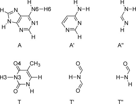 "Adenine (A) and its smaller analogs (A′ and A"") and Thymine (T) and its smaller analogs (T′ and T"")."
