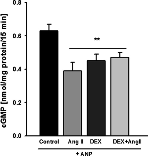 "Dexamethasone did not influence the inhibitory effect of Ang II on ANP-dependent production of cGMP. Mouse podocytes were preincubated for 24 h in the presence or absence of 1 µM DEX. 0.1 μM ANP and/or 1 μM Ang II were added for 15 min, as described in ""Materials and methods."" Results are presented as means from 4 independent experiments ±SEM. **P < 0.01 versus control"