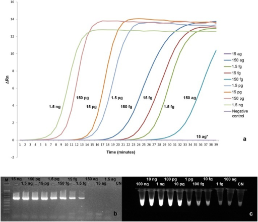 Results of the sensitivity assay.a) ReT-LAMP. The curves represent the ΔRn after subtraction of the ROX reference dye fluorescence. The amount of D. repens DNA for each reaction is indicated near the respective curve. *The curves of the reaction with 15 ag of DNA and of negative control are overlapping. b) PCR. M: AmpliSize Molecular Ruler, 50–2,000 bp Ladder (BioRad Laboratories, Milan, Italy). c) PI-LAMP. The bright fluorescence indicates the positivity of the reaction.