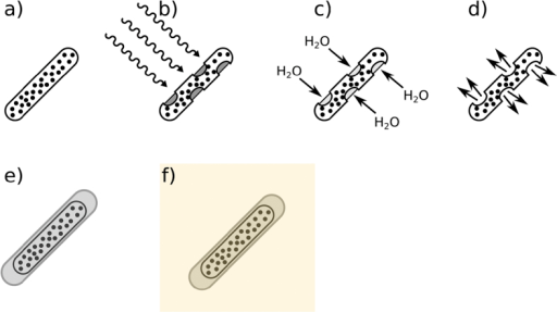 Process of capsule synthesis and mechanism of drug release.(a) demonstrates a SPION-wax coated drug capsule which, when at the desired point of release, is then irradiated with radiofrequency, heating the SPIONs and melting the wax coating, (b). Water ingress then dissolves the gelatin drug capsule template, (c) before release of the drug payload, (d). In order to prevent wax melting during incorporation into an agar phantom for MRI/CT imaging, a thin layer of pure octacosane (m.p. 57–62 °C) was added via dip-coating, (e). The octacosane-SPION-wax coated capsule was then incorporated into an agar phantom at ~40 °C, (f).
