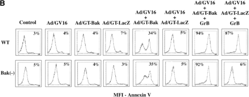 Restoration of apoptotic response to GrB after Bak gene transduction. (A) Bak expression, caspase-3 activation and PARP cleavage after adenoviral-mediated transduction of Bak. 24 h after infection of Bak-deficient cells with the indicated combinations of adenoviral vectors, cell extracts were assessed by immunoblotting for Bak expression. The membrane was stripped and reprobed for caspase-3 activation, stripped again, and reprobed with anti-PARP mAb. The p20 caspase-3 subunit in LacZ transduced cells represents the direct cleavage of caspase-3 by GrB. (B) Susceptibility of Bak-deficient cells to GrB 24 h after adenoviral transduction with Bak, but not with LacZ gene. The presence of apoptotic cells was assessed by annexin V staining of wild-type or Bak-deficient cells infected with the indicated combinations of adenoviral vectors and treated with GrB (1 μg/ml). Percentage of annexin V-positive cells is indicated.