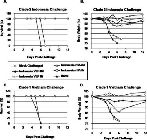 Protection from influenza virus challenge.At week 5, mice vaccinated with H5N1 clade 2-dervied vaccines were challenged intranasally with a lethal dose of reassortant influenza virus (A/Viet Nam/1203/2004 (clade 1) or A/Indonesia/05/2005 (clade 2)) and monitored daily for weight loss and mortality. The data are plotted as percentage of the average initial weight. Percentage of (A) original weight or (B) survival following challenge with clade 2 AIndonesia/05/2005 reassortant virus. Percentage of (C) original weight or (D) survival following challenge with clade 1 A/Viet Nam/1203/2004 reassortant virus. Mice that lost greater than 75% body weight were euthanized. Naïve mice were unvaccinated.