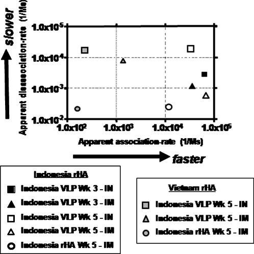 Kinetics of Indonesia VLP elicited antisera binding to H5N1 rHA antigens.Kinetics of antisera binding to homologous, Indonesia clade 2 rHA (black square) and heterologous, Viet Nam clade 1 rHA (white square). Values on x-axis represent the apparent association rate of antibody binding to HA and the values on the y-axis represent the apparent disassociation rate of antibody from the HA antigen.