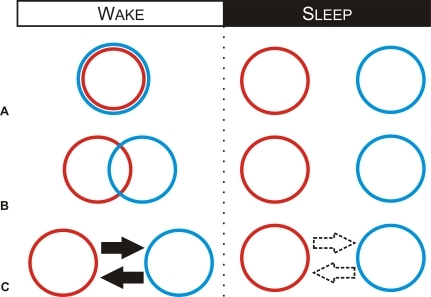 A Schematic Showing How Memory Systems May Interact during Wakefulness, and Operate Independently during Sleep