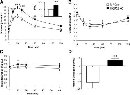 UCP2BKO mice are glucose intolerant. A: OGTTs in 12-week-old mice after an overnight fast. The inset shows the incremental area under the glucose curve (iAUC) B: ipITT in 13-week-old mice after a 4-h fast. C: Plasma insulin levels during the OGTT. D: The change in plasma glucagon levels during the first 10 min of the OGTT. Blood samples were taken at 0 and 10 min after glucose gavage, and the change in plasma glucagon level over 10 min was calculated. n = 8–15 mice per genotype. **P < 0.01, ***P < 0.001. The error bars show the SEM.