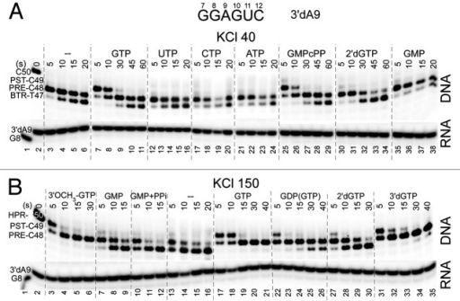 Figure 3. Exo III mapping to obtain a ranking of GTP analogs (400 μM) to stabilize forward RNAP TEC translocation at 40 (upper panel) and 150 mM KCl (lower panel). PPi was at 1 mM. pH is at 7.9.