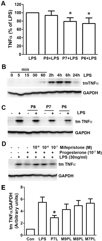 Progesterone attenuated LPS-stimulated TNF-α production.Cells were treated in serum-free DMEM. (A) Pretreatment of progesterone for 1 h dose-dependently suppressed LPS (30 ng/ml, 4 h)-mediated TNF-α secretion in cell supernants. *P<0.05 compared with LPS group, n = 7. P8, P7 and P6: progesterone at 10−8, 10−7 and 10−6 M. (B) The representative immunoblot demonstrated time course changes for transmembrane TNF-α (tmTNFα) and glyceraldehyde-3-phosphate dehydrogenase (GAPDH, a loading control) with LPS (30 ng/ml) stimulation from 0 to 24 h. (C) Pretreatment of progesterone for 1 h dose-dependently decreased LPS (30 ng/ml, 4 h)-stimulated tmTNF-α expression. The representative immunoblot (D) and summary of band densitometric quantifications (E) showed that progesterone receptor antagonist mifepristone reversed progesterone's effect on tmTNF-α expression induced by 4 h LPS stimulation. *P<0.05 compared to LPS group, n = 3. P7L: progesterone 10−7 M+LPS; M9PL: mifepristone 10−9 M+progesterone 10−7 M+LPS; M8PL: mifepristone 10−8 M+progesterone 10−7 M+LPS; M7PL: mifepristone 10−7 M+progesterone 10−7 M+LPS.
