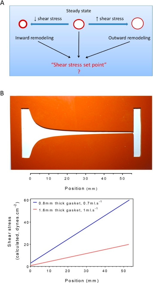 Testing the set point hypothesis.(A) Definition of the 'shear stress set point'. (B) Picture of a silicone gasket used in the gradient flow chamber with the corresponding calculation of the theoretical shear stress level across the channel with two different conditions of gasket thickness and flow rate.DOI:http://dx.doi.org/10.7554/eLife.04645.003