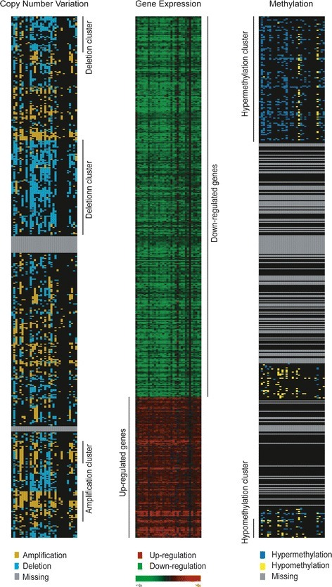 Heatmaps of gene expression, copy number variation (CNV), and methylation level of the 505 differentially expressed genes in tumor tissue. In the gene expression heatmap (middle column), red represents up-regulation and green represents down-regulation. The gene order was the same in all three panels. For CNV and methylation alteration (left, right columns), one-way hierarchical clustering was first performed on the β-value difference and subsequently the copy number difference. For CNV (left column), gold indicates amplification and cyan indicates deletion. For methylation level (right column), blue denotes hypermethylation and yellow denotes hypomethylation.