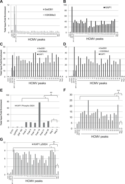 A KAP1 phosphorylation switch distinguishes HCMV latency and lytic replication.ChIP-PCR with SETDB1-, H3K9Me3-, KAP1-, pS824KAP1-specific antibodies were performed on MRC-5 fibroblasts (A, B, F, G) or CD34+ HSC (C, D, E) infected with the HCMV TB40-E (A, B, G) or AD169 (C, D, E, F) strains, as described in Figure 3.DOI:http://dx.doi.org/10.7554/eLife.06068.011