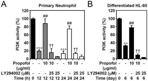 Propofol treatment reverses PI3-kinase down-regulation in primary neutrophils and ATRA-differentiated granulocytic HL60 cells.(A) Isolated human primary neutrophils and (B) ATRA (1 μM)-differentiated granulocytic HL60 cells were treated with propofol with or without LY294002 treatment for the indicated time points. PIP3 precipitate assay showing the PI3-kinase activity. The data are shown as changes with respect to the normalized values of the control. The data are shown as the means ± SD of three individual experiments. **P < 0.01 and ***P < 0.001 compared with untreated at 0 h. ##P < 0.01 compared with untreated at each time points. ††P < 0.01 compared with propofol.