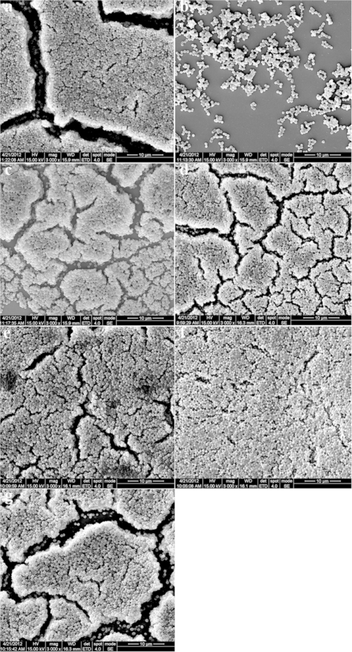 Scanning electron microscopic images showing the structure of the biofilm of Staphylococcus aureus ATCC25923.Magnifications, ×3000. (a) Control without ethanol (18-h incubation) (218), (b) 30 μg/mL ursolic acid (2U30), (c) 100 μg/mL resveratrol (2R100), (d) control without ethanol (36 h) (236), (e) 150 μg/mL resveratrol (2R150), (f) 8 μg/mL vancomycin (2V), and (g) the mixture of 8 μg/mL vancomycin and 150 μg/mL resveratrol.