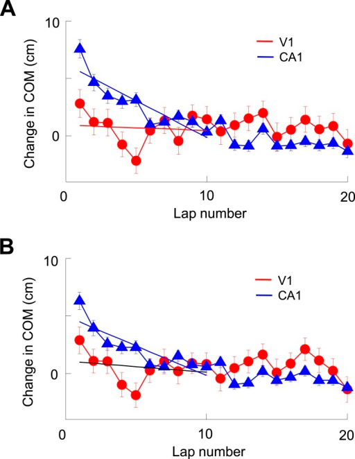 V1 location-responsive cells showed much less lap-by-lap backward shift in their firing locations than CA1 place cells.(A) Average lap-by-lap changes in COM for V1 location-responsive cells (red, N = 670) and CA1 place cells (blue, N = 1743). The COM change of a firing field at each lap was computed relative to its stabilized value, which was the average of those values at laps #21–25. Solid lines: linear regressions between the COM change and lap numbers for the first 10 laps. It can be seen that the COMs of CA1 place fields significantly and systematically shifted backward (COM decreased with lap number) along the animal's moving direction (p < 0.0001, one-way ANOVA; Pearson's R = −0.89, p = 0.0006). The COMs of V1 firing fields appeared to shift backward during the first 5 laps or so, but fluctuated forward/backward in later laps. As a result, there was no significant change in COM (p = 0.09, one-way ANOVA) within the first 10 laps and no significant correlation between average COM change and lap number (Pearson's R = 0.10, p = 0.79). In addition, the average change in COM of V1 firing fields was significantly less than that of CA1 place fields within the first 10 laps (p < 0.0001, two-way ANOVA). (B) Same as A, but for lap-by-lap COM change of V1 and CA1 cells after removing the modulation by speed and head direction. The results are similar. There was a systematic backward shifting of the modified COM for CA1 place fields (p < 0.0001, one-way ANOVA; Pearson's R = 0.86, p = 0.0014), but not so for V1 firing fields (p = 0.13; R = 0.23, p = 0.53; comparison between CA1 and V1: p < 0.0001, two-way ANOVA). Therefore, the analysis indicates that V1 firing fields showed much less dynamics at the short-term lap-by-lap time scale than CA1 place fields.DOI:http://dx.doi.org/10.7554/eLife.08902.013