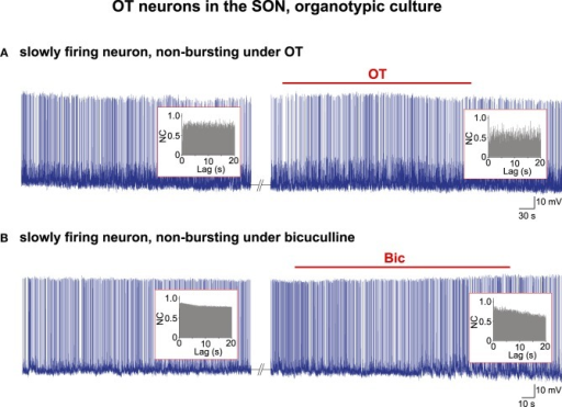 Electrical activity in OT neurons in organotypic cultures. Examples of two spontaneously firing cells that did not change their pattern of activity under bath application of (A) the OT peptide (10−5 M) or (B) the GABAA receptor antagonist bicuculline (Bic; 10−5 M). No rhythmic drive was detected by the AAA (insets) either before or during the application of the burst-inducing agents.