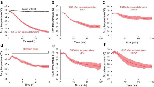 Hypothermia is recapitulated by reactivation of genetically tagged neuronal ensembles in LPO-TetTag-hM3Dq and MnPO-TetTag-hM3Dq mice following recovery sleep, but only in LPO-TetTag-hM3Dq mice following dexmedetomidine-induced sedation. Each panel shows changes in body temperature following: (a) dexmedetomidine sedation (n=10) (red) or saline (n=20) or CNO (n=3) (black), (b) CNO reactivation after dexmedetomidine sedation for LPO-TetTag-hM3Dq mice (n=5), (c) CNO reactivation after dexmedetomidine sedation for MnPO-TetTag-hM3Dq mice (n=5), (d) recovery sleep (n=10), (e) CNO reactivation after recovery sleep for LPO-TetTag-hM3Dq mice (n=6), and (f) CNO reactivation after recovery sleep for MnPO-TetTag-hM3Dq mice (n=5). The data in panels a) and d) are for LPO-TetTag-hM3Dq and MnPO-TetTag-hM3Dq mice combined, because these were indistinguishable.