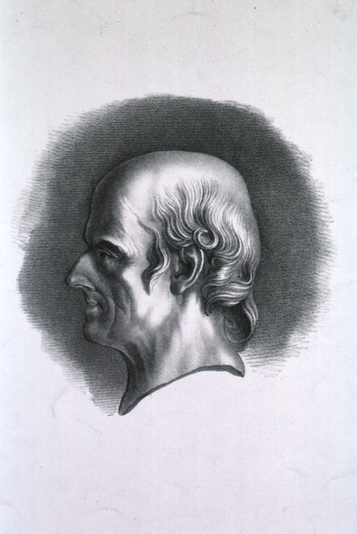 <p>Head, left profile.</p>