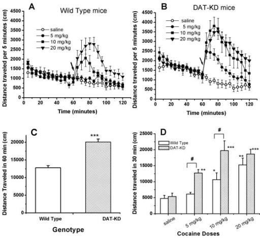Effect of cocaine on locomotor activity in DAT-KD mutan