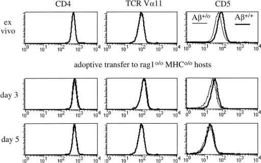 Maintenance of CD5 expression levels on naive peripheral CD4 T cells requires MHC contact. 107 APC-depleted Rag1o/o AND TCR transgenic LN cells from Aβ+/+ (bold) or Aβ+/o (thin line) donors were transferred intravenously to Rag1o/o MHCo/o hosts and host LN cells were analyzed for CD4, TCR Vα11 (the AND α chain), and CD5 by flow cytometry at the indicated times (histogram overlays are gated on CD4+ cells).