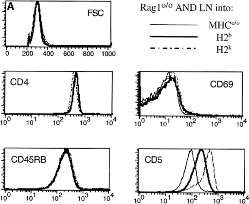 Modulation of CD5 levels by environmental MHC expression and haplotype. APC-depleted Rag1o/o H2bxk AND TCR transgenic LN cells were placed in 3-D reaggregate culture with a combination of thymic stroma and BM-derived APCs (reference 39) prepared from MHCo mice (thin line) or from mice expressing one of two selecting MHC haplotypes, H2b (C57BL/10, bold line), or H2k (B10.BR, dashed line). 3 d later cell recovery was between 60 and 80% of input for all MHC haplotypes (data not shown) and cells were analyzed (A) for forward scatter, CD4, CD45RB, CD69, and CD5 expression by flow cytometry (histogram overlays are gated on CD4 cells; the brighter CD5 staining in this and subsequent figures is due to the use of PE-conjugated mAb instead of the FITC conjugates used in previous figures) and (B) for tyrosine phosphorylation status by Western blot analysis of total cell lysates with anti-phosphotyrosine mAb. The blot was stripped and reprobed for CD3 ζ protein.