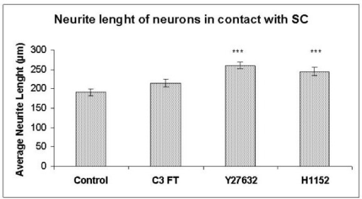 Histogram comparing neurite lengths of neurons in contact with Schwann cells after incubation with C3 FT, Y27632 and H1152. *** p ≤ 0.001.