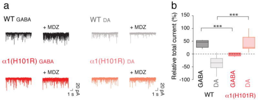 The total current generated by sIPSC in DA neurons is decreased by MDZa, Example trace of sIPSCs recordings in GABA and DA neurons obtained before and after application of MDZ in slices from WT and α1(H101R) mice. sIPSCs were abolished with picrotoxin (PTX, 100 μM, not shown). b, Group data for the relative increase in the overall charge transfer (1 min) after MDZ bath-application. Note that in WT mice the total current in DA neurons decreases with MDZ application while in α1(H101R) mice there is an increase. GABA/WT vs GABA/α1(H101R) t(9) = 6.39, DA/WT vs DA/α1(H101R) t(15) = 5.50. n = 6-7.