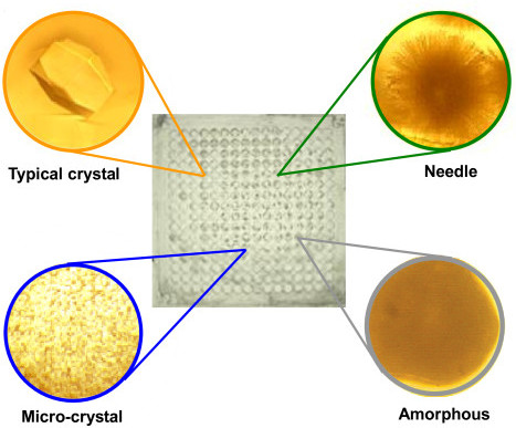 Lysozyme crystallization. In 256 different conditions, four distinctive types of crystals: typical, micro, needle-like and amorphous crystals were obtained. Some of the wells of an MMV are shown as inset (close-up images).