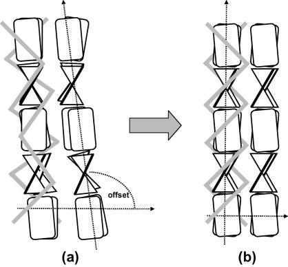 Structural change from the calamus to the central region: close to the calamus, (a), the β-sheets are misoriented with respect to the filament axis. Away from the calamus, (b), they are increasingly aligned and form a highly oriented structure with filament axis and lateral packing being perfectly perpendicular. The grey bars symbolize the outer parts of the molecule, which are not organized in pleated sheets. Both the diameter of the filaments and their distance decreases.