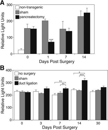 SeAP activity falls in the serum of adult BAC NEUROG3-SeAP/EGFP transgenic mice after partial pancreatectomy but increases after pancreatic duct ligation. Day 0 is prior to surgery. (A) The white bar at day 0 shows the background signal for SeAP activity in the serum of non-transgenic mice. Gray bars show the activity of SeAP in the serum of transgenic animals that underwent a sham operation. Black bars show the activity of SeAP in the serum of transgenic animals that underwent partial pancreatectomy. Data represent mean + s.e.m. from three mice in each treated group, and four mice in the untreated, non-transgenic group. ***P<0.001 compared with serum from sham-operated mice by Student's t-test. (B) The white bars show the background signal for SeAP activity in the serum of control transgenic mice that did not have surgery. Gray bars show the activity of SeAP in the serum of animals that underwent a sham operation. Black bars show the activity of SeAP in the serum of animals that underwent duct ligation. Data represent mean + s.e.m. from six mice in the untreated group, and seven mice in each treated group. *P<0.03, **P<0.01, ***P<0.001 by Student's t-test for the comparisons indicated.