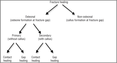 Fracture healing in biological plate osteosynthesis