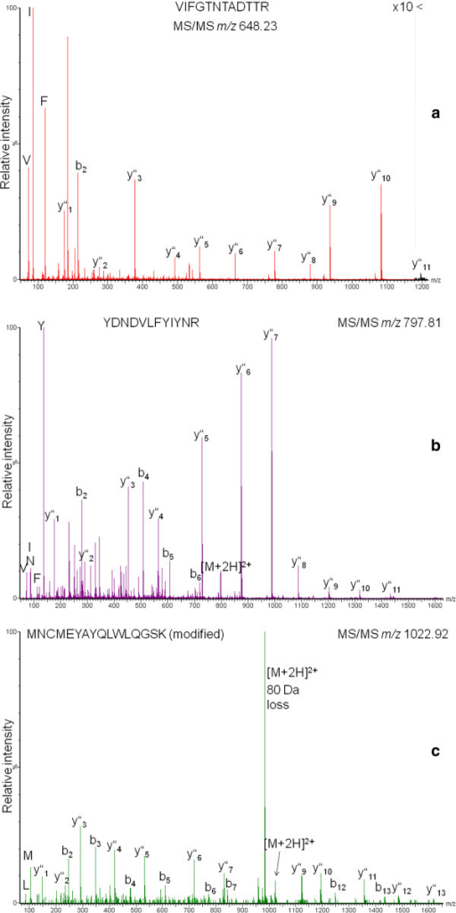 MS/MS spectra of peptides unique for specific 30 kDa lipoproteins. Fragment ion series from the N- and C-terminus were observed as well as immonium ions. A) L302. B/C) from purified lipoprotein (fraction 60, Fig. 4). B) LP3/L301, C) LP3/L301, modified (phosphorylated or O-sulfonated).