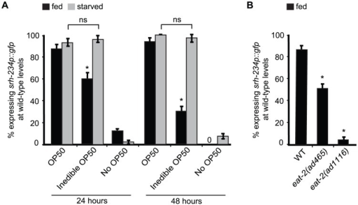 External food presence and internal state signals alter srh-234 expression levels.A) Percentage of animals expressing srh-234p::gfp at wild-type levels when fed with E. coli OP50 food (OP50), aztreonam-treated E. coli OP50 food (inedible OP50), or no food (no OP50) for 24 and 48 hours. Young adult animals grown on edible E. coli OP50 food were divided into two groups: a fed group maintained in the presence of food, and a starved group maintained in the absence of food for 6–12 hours. We confirmed that srh-234 expression levels upon starvation were reduced. Subsequently, adults were picked onto new NGM plates seeded with either edible E. coli OP50, no E. coli OP50, or inedible E. coli OP50 food (see Material and Methods). B) Percentage of eat-2(lf) mutants defective in food intake expressing srh-234p::gfp at wild-type levels. In all experiments, wild-type expression of srh-234p::gfp was defined as expression levels that allowed visualization of both the cell bodies and processes of at least one ADL neuron (see Material and Methods). Animals (n>150) were examined at 150× magnification for each condition or genotype. * indicates values that is different from that of wild-type animals at P<0.001, and n.s. indicates the values that are not significantly different between the different food conditions compared by brackets using a χ2 test of independence. Error bars denote the SEP.