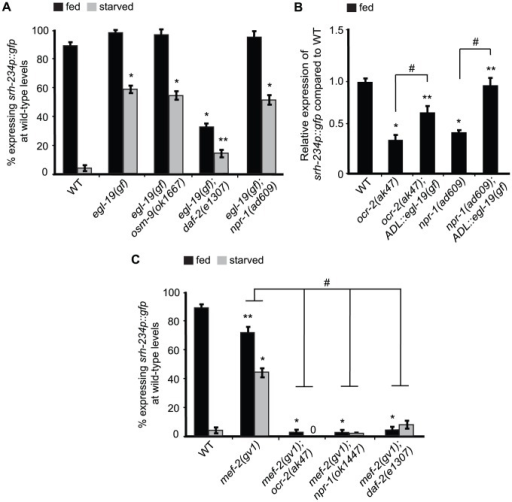 mef-2 mutations and increased calcium signaling suppress the starvation-induced downregulation of srh-234 expression.A, C) Percentage of animals of the indicated genotypes expressing srh-234p::gfp at wild-type levels. Animals (n>150) were examined at 150× magnification for each genotype. B) Relative expression of srh-234p::gfp in ocr-2 and npr-1 mutants compared to wild-type. For strains carrying ADL::egl-19(gf) extrachromosomal arrays (see Material and Methods), data shown is for two independent transgenic lines. Animals (n = 15–20) were examined at 400× magnification for each genotype. * and ** indicates values that are different from that of wild-type animals at P<0.001, and P<0.05, respectively, and # indicates the values that are different between the genotypes compared by brackets at P<0.05 using either a two-sample t-test or a χ2 test of independence. Error bars denote the SEP or SEM.