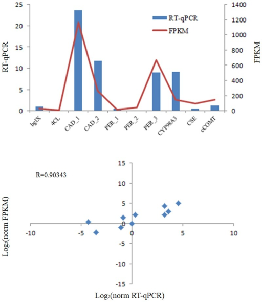 RT-qPCR analysis. Real-time PCR results for 10 selected genes related to lignin biosynthesis pathway.Plot in the top panel of the figure presents RNA-seq (line graph) and qPCR (bar graph) quantification results, and the bottom panel shows their high correlations (r>0.9). Corresponding gene names and unique gene identifier numbers in the assembly are bglX (comp10579_c0), 4CL (comp26895_c0), CAD_1 (comp30193_c0), CAD_2 (comp30398_c0), PER_1 (comp21305_c0), PER_2 (comp25087_c0), PER_3 (comp30272_c0), CYP98A3 (comp26902_c8), CSE (comp19323_c0), and cCOMT (comp28020_c1). (Notes: as comp30193_c0 and comp30398_c0 were both annotated as CAD gene, we added subscripts to differentiate them. The same thing was done to comp21305_c0, comp25087_c0 and comp30272_c0, which were all annotated as PER gene).