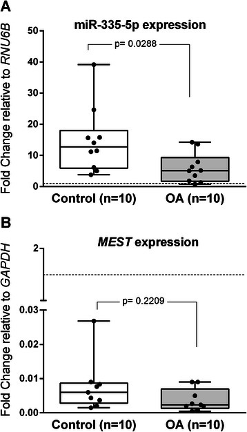 miR-335-5p and MEST expression in OA-MSCs and Control-MSCs. a. Box and wiskers plot of miR-335-5p expression in OA-MSCs and Control-MSCs relative to the RNU6B internal control gene. b. MEST expression in human in OA-MSCs and Control-MSCs relative to the GAPDH reference gene. A positive correlation between miR-335-5p and MEST expression was detected (Spearman correlation coefficient, r = 0.59; p = 0.0961 in OA and r = 0.6; p = 0.0968 in controls