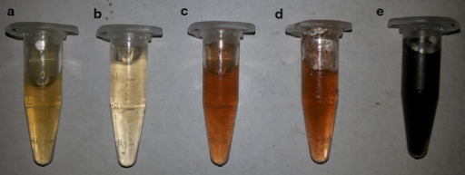 Formation of silver nanoparticles by green synthesis. AgNP's were formed by the reduction of silver ions by Gracilaria crassa. This figure illustrates the various stages of formation of AgNP's; a pure algal extracts (pale yellow); b at 0 min, on immediate addition of 1 mM solution of Silver nitrate (no reaction); c after 15 min (slight reduction); d after 30 min (moderate reduction); e after 12 h of addition of 1 mM solution of Silver nitrate (Complete reduction).