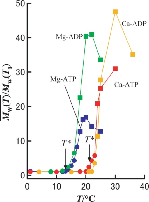 Effect of temperature on polymerization of actin with different divalent cations and nucleotides.Relative average molecular weight of actin aggregates in solution, M̄w(T)/Mw(T0), plotted as a function of temperature determined from an extrapolated zero-angle scattering intensity I(q→0) is shown for Ca-ATP-actin (red), Ca-ADP-actin (orange), Mg-ATP-actin (blue), and Mg-ADP-actin (green). Circles and squares indicate, respectively, the non-fibrous and fibrous nature of actin oligomers judged from the absence or presence of the fiber reflection pattern in I(q). The temperature T*, at which polymerization starts, depends not on the nucleotide state, but on the divalent cation species.