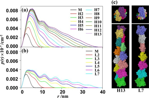 p(r) functions simulated from the model structures of helical and linear polymers.(a), p(r) simulated from the crystal structures of a helical polymer (dimer (H2)∼13mer (H13)) and a monomer. (b), p(r) simulated from the crystal structures of a linear polymer (dimer (L2)∼7mer (L7)) and a monomer. The actin concentration was 4.0 mg ml−1. (c), Three-dimensional structures of various actin aggregates: a helical 13mer (H13) (left) and an assumed linear 7mer (L7) (right). The model structure was obtained from PDB data of the Holmes' actin filament model24. The structure of a linear polymer was produced from the helical structure (see text).