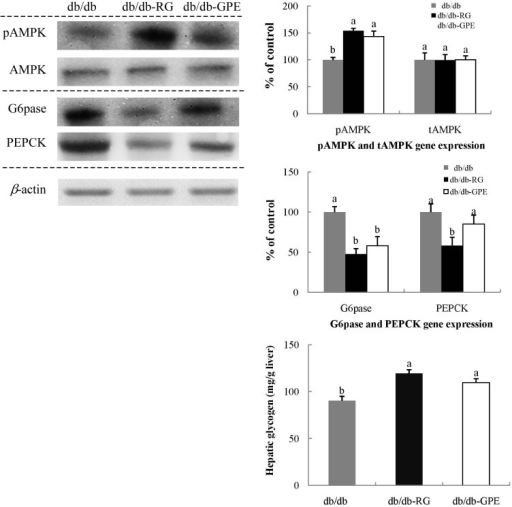 Effect of G. procumbens extract (GPE) supplementation on G6Pase and PEPCK expression and hepatic glycogen in the liver of C57BL/KsJ-db/db mice.Representative blots of G6Pase and PEPCK protein expression are shown with protein expression levels quantified relative to the expression level observed in samples from db/db-control mice. Each value is expressed as mean ± SD of experiments performed in triplicate. a-c Values denoted by different letters are significantly different (P < 0.05), as analyzed by Duncan's multiple range test. PEPCK: Phosphoenolpyruvate carboxykinase, G6Pase: Glucose-6-phosphatase.
