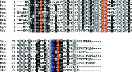 Sequence alignment of Sso6206 and its homologues from archaea and bacteria. The four conserved acidic residues are highlighted in red and the conserved histidine in blue. Sso, Sso6206 from S. solfataricus; Pto, Mka, Pae, Pfu, Mth, Mma, Dps and Sfr, homologues from Picrophilus torridus, Methanopyrus kandleri, Pyrobaculum aerophilum, Pyrococcus furiosus, Methanothermobacter thermautotrophicum, Methanococcus maripaludis, Desulfotalea psychrophila and Shewanella frigidimarina, respectively. Sso6206 contains a single cysteine residue.