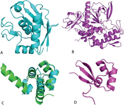 Examples of splitted SCOP superfamilies with large structural changes.Above: Two domains classified in SCOP in the metalloproteases superfamily, but splitted in CATH. Their codes are 1c7ka_ (A) and 1e1h.1 (B), with lengths of 132 and 399 residues respectively. Most of the secondary structure elements in the long protein are not matched in the short one. Below: Lambda repressor-like DNA-binding domains 1lmb3_ and 1r69__ (C) and 1d1la_ (D), which represent a well studied example of possible secondary structure switch in evolution.