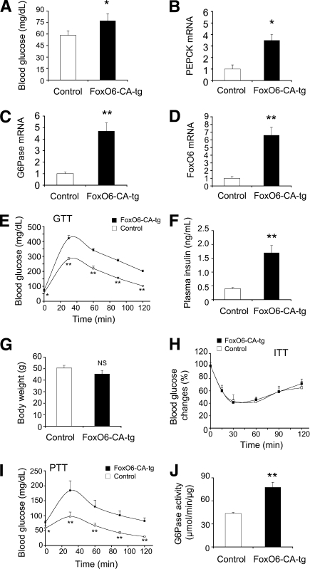 Effect of FoxO6 transgenic expression on glucose metabolism. FoxO6-CA transgenic (FoxO6-CA-tg) and wild-type littermates were characterized for glucose metabolism. A: Blood glucose levels were determined after a 16-h fast. B: Hepatic PEPCK mRNA levels. C: Hepatic G6Pase mRNA levels. D: Hepatic FoxO6 mRNA levels. E: Blood glucose profiles of glucose tolerance tests (GTT). Mice were fasted for 16 h, followed by glucose injection (2 g/kg i.p. body wt). Blood glucose levels were measured before and after glucose injection. F: Plasma insulin levels were determined after a 16-h fast. G: Body weight. H: Blood glucose profiles of insulin tolerance tests (ITT). Mice were injected with insulin (0.75 IU/kg i.p.), followed by determination of blood glucose levels. I: Blood glucose profiles of pyruvate tolerance tests (PTT). Mice were fasted for 16 h, followed by injection of pyruvate (2 g/kg i.p. body wt). Blood glucose levels were measured before and after pyruvate injection. J: Hepatic G6Pase activity. All data were obtained from male FoxO6-CA-tg mice (n = 8–10) and male age-matched (aged 49–40 weeks) control littermates (n = 5–8). *P < 0.05 and **P < 0.005 vs. control by ANOVA; NS, not significant.