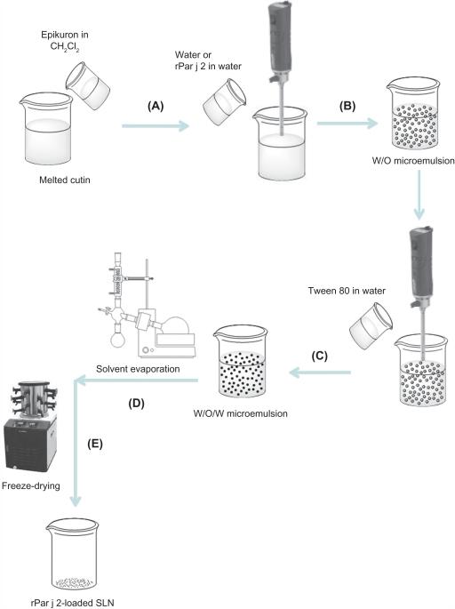 schematic diagram of solid lipid nanoparticle  sln  pre