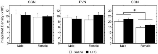 Lack of effect of prenatal LPS on vasopressin expression in the SCN, PVN, and SON. Means (+ SEM) of the integrated density of AVP mRNA labeling in the SCN, PVN, and SON. Although there was no effect of LPS treatment, overall, males showed higher integrated density in the SON than did females (ANOVA, p < 0.008).