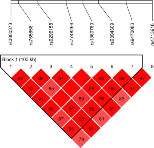 Relative positions and LD estimates between FKBP5 polymorphisms in the analyzed population-patients with melancholic depression.Note: Colored squares correspond to D' values with numerical estimates given within the squares.