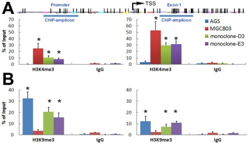Characterization of histone modifications in the p16 chromatin by ChIP-PCR assays.(A) The active H3K4me3 level within the p16 CpG islands in the fusion subclones and MGC803 cells was significantly higher than AGS cells, especially in the exon-1 region (monoclones vs. AGS, P<0.01). (B) The repressive H3K9me3 level in the fusion subclones and AGS cells was significantly higher than MGC803 cells, especially in the promoter region (monoclones vs. MGC803, P<0.01).