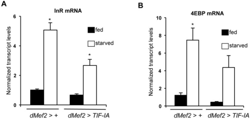TIF-IA overexpression in muscle can partially reverse the effects of starvation on FOXO-dependent genes.(A) Data present mean +/− SEM values from qPCR analysis of InR mRNA levels in fed and starved larvae of dMef2>+ and dMef2>TIF-IA animals. Starvation increased InR mRNA levels, compared to fed controls (*P<0.0001, One-way ANOVA and Tukey's post test). Overexpression of TIF-IA in muscle significantly suppressed this starvation-mediated InR induction (*P<0.0001, One-way ANOVA and Tukey's post test). Data normalized to β tubulin mRNA. (B) Data present mean +/− SEM values from qPCR analysis of 4EBP mRNA levels in fed and starved larvae of dMef2>+ and dMef2>TIF-IA animals. Starvation increased 4EBP mRNA levels, compared to fed controls (*P = 0.0003, One-way ANOVA and Tukey's post test). Overexpression of TIF-IA in partially suppressed the starvation mediated 4EBP mRNA induction, although not to a statistically significant level (P = 0.125, One-way ANOVA and Tukey's post test). Data normalized to β tubulin mRNA. All error bars indicate SEM.